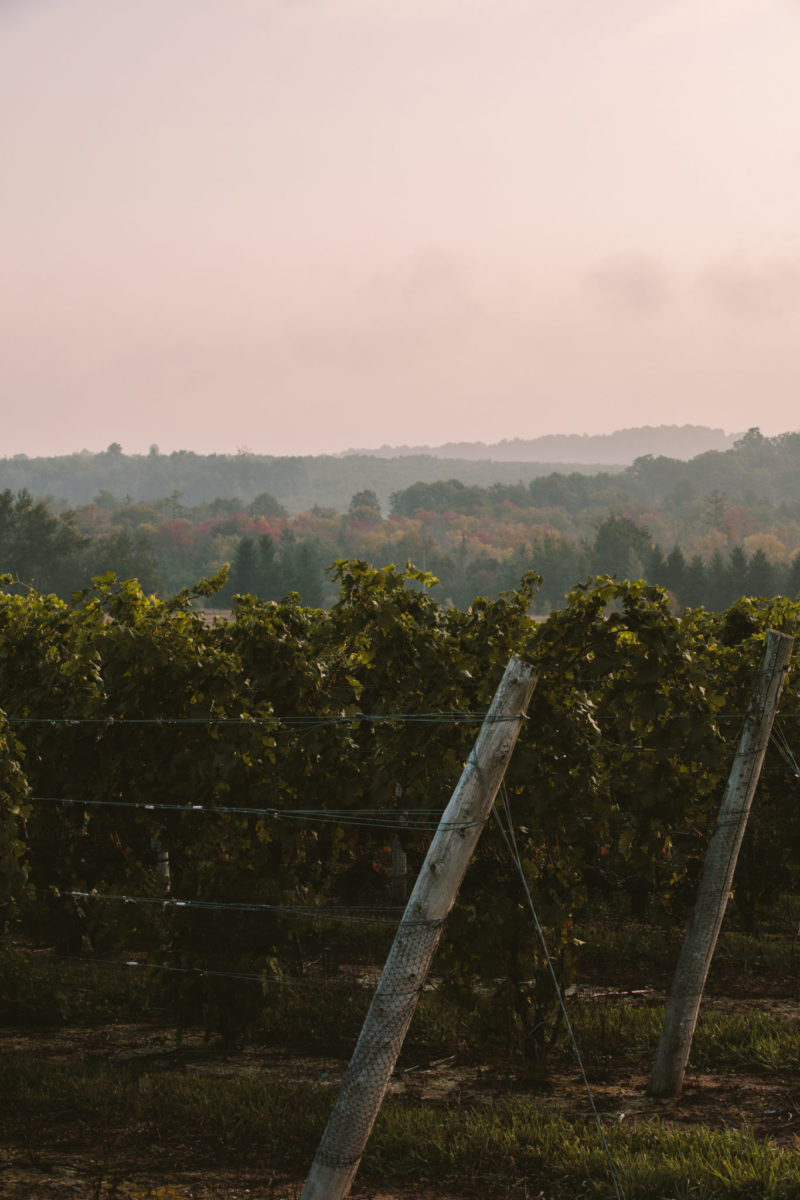 northern michigan vineyard in the morning at aurora cellars