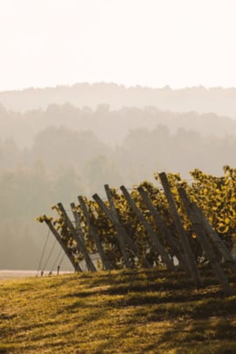 Hazy Day at Aurora Cellars Vineyard
